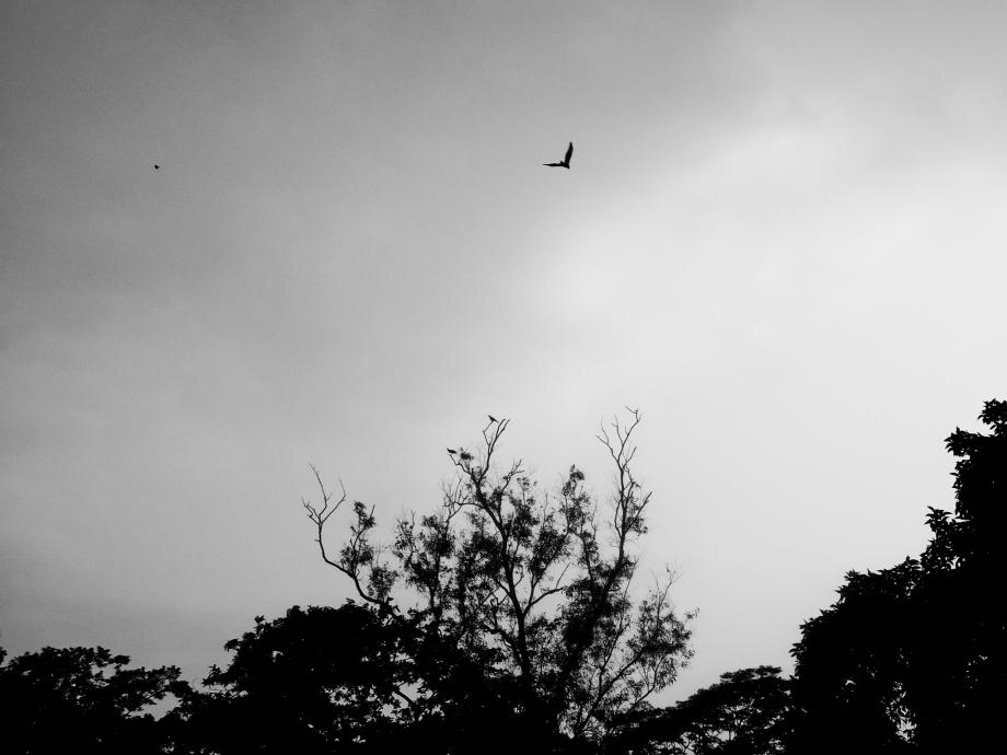 Alone_bird